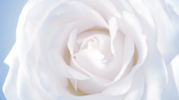 New Cosmetic film: A Rose is a  Rose by Isabelle BONJEAN