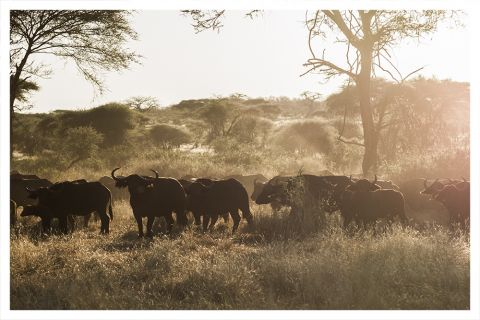 Ruaha, Tanzani for conde naste traveller uk